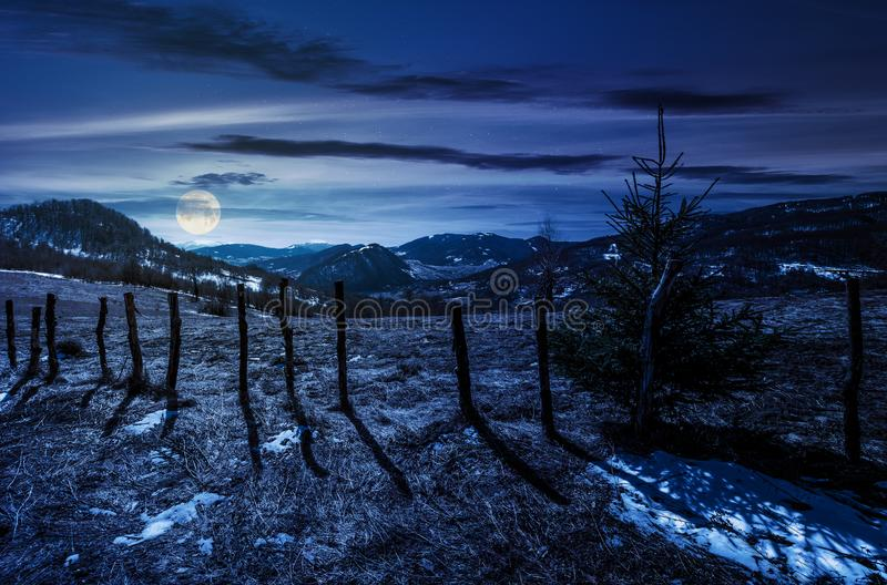Spruce tree on a hillside in springtime at night. In full moon light. beautiful landscape with grassy weathered slopes and some snow in mountains stock image