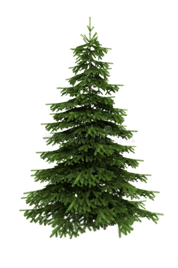 Download Spruce Tree Isolated On White Background Stock Illustration - Illustration: 9374016