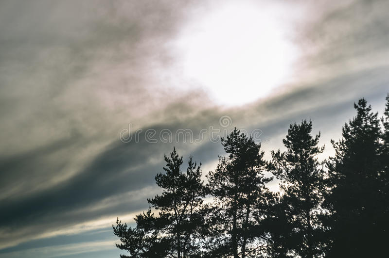 Spruce trees and sky with clouds on sunset royalty free stock photos