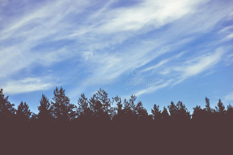 Spruce trees and sky with clouds on sunset royalty free stock photo