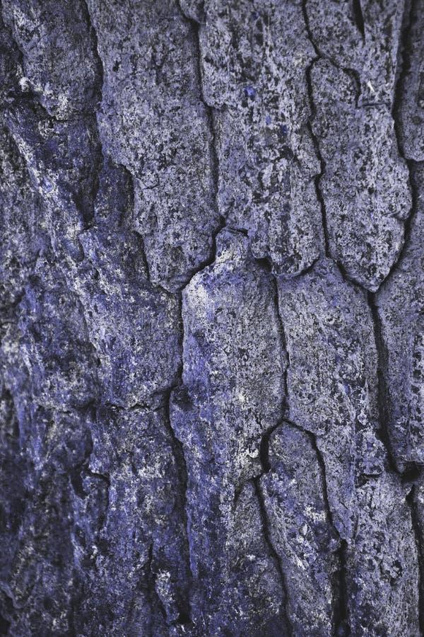 sprucken grov purpurfärgad bakgrund för trädskäll royaltyfri bild