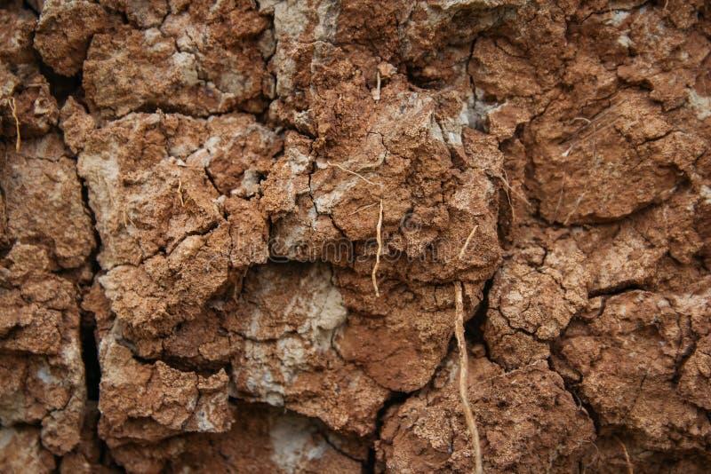 Sprucken jordjordning Sprucken jordtextur eller bakgrund naturlig abstraktion Jordbakgrund malande sprickor royaltyfria foton