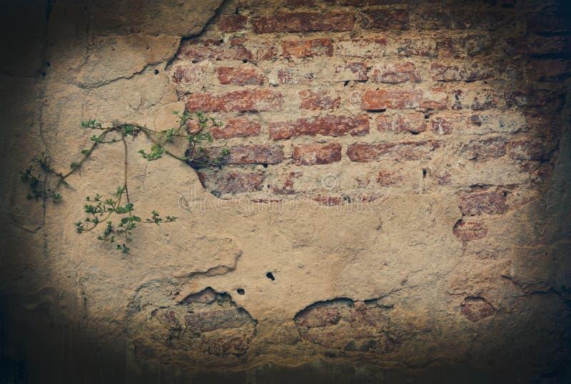 Sprucken konkret bakgrund för tappningtegelstenvägg arkivfoton