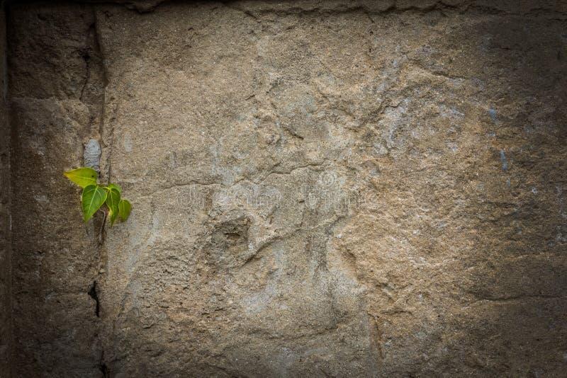 Sprucken konkret bakgrund för tappningtegelstenvägg arkivbilder