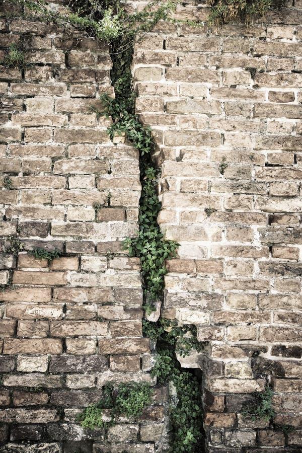 Sprucken tegelstenvägg - djup spricka i en tegelstenvägg royaltyfria bilder