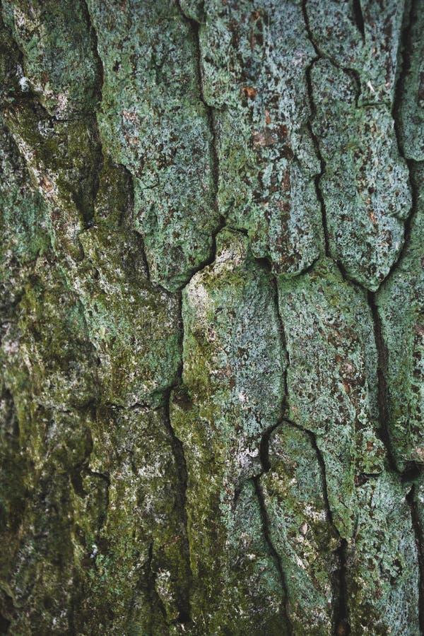 sprucket busegräsplanträd fotografering för bildbyråer