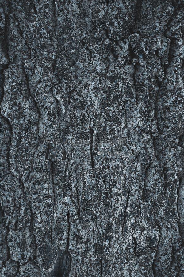 sprucket busegrå färgträd royaltyfri fotografi