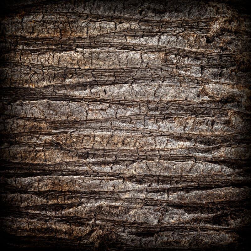 Sprucket skäll av gamla tropiska palmträd royaltyfria bilder