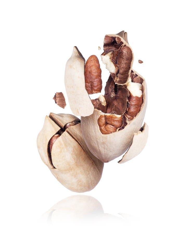 Sprucket slut för pecannötmutter upp på en vit bakgrund royaltyfri bild