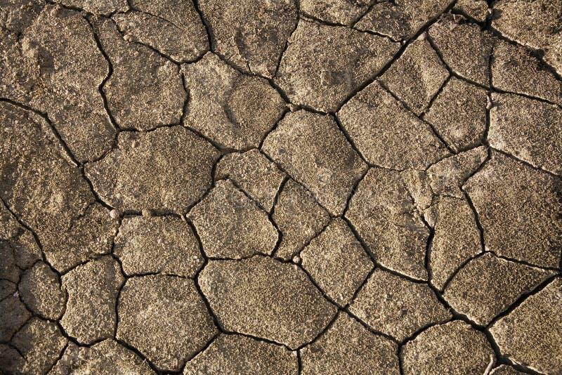 sprucket torka jord namibia royaltyfri bild