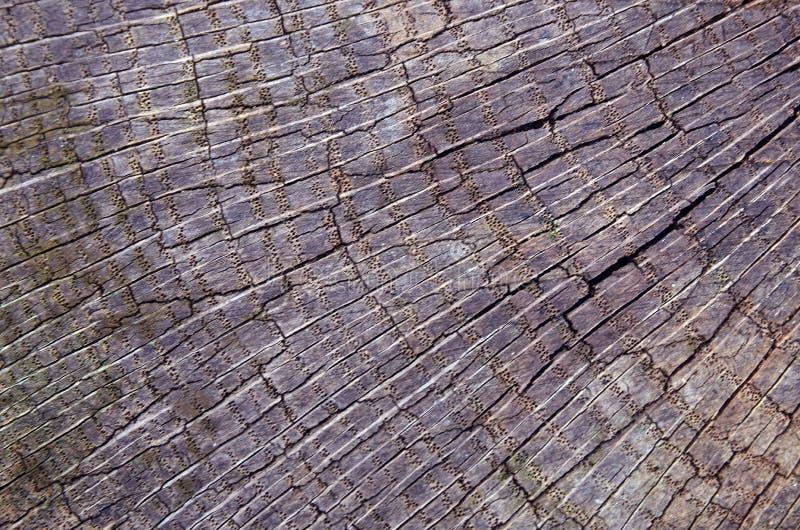 sprucket trä för bakgrund Gammalt slut för textur för trädstubbe upp arkivbild