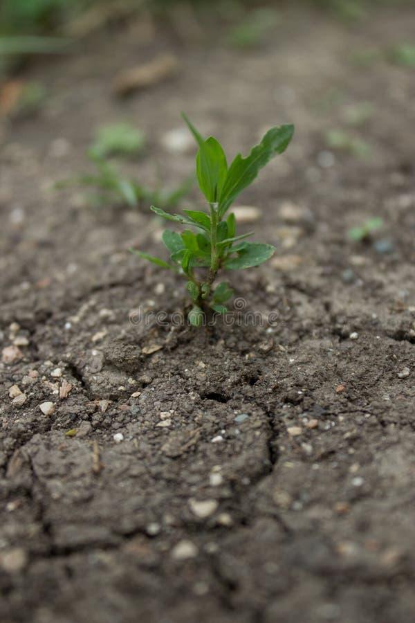 Spruit in de grond stock afbeelding