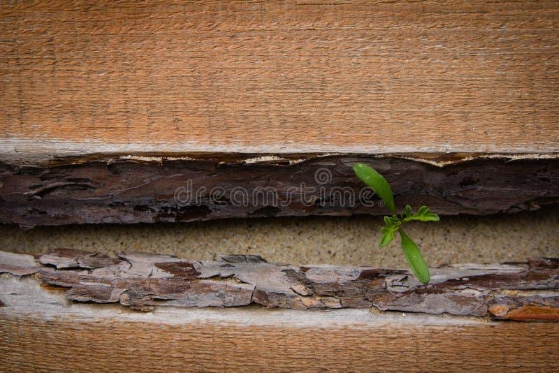 Download Spruit Die Over De Houten Vloer Ontspruiten Stock Afbeelding - Afbeelding bestaande uit milieu, up: 54084587