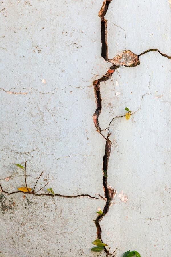 Sprung auf Wand stockfoto