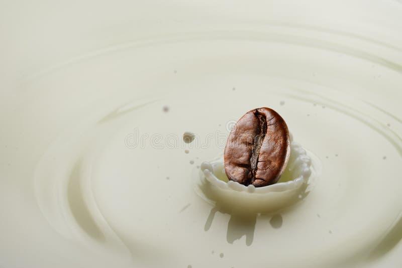 Spruzzata del chicco di caffè fotografia stock libera da diritti