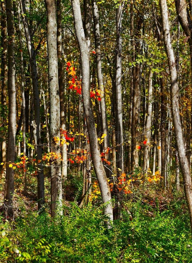 Spruzzata del terreno boscoso dell'arancia immagine stock libera da diritti