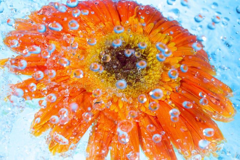 Spruzzata dell'acqua su un fiore immagine stock