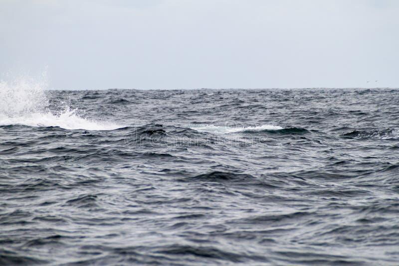 Spruzzata della balena fotografia stock
