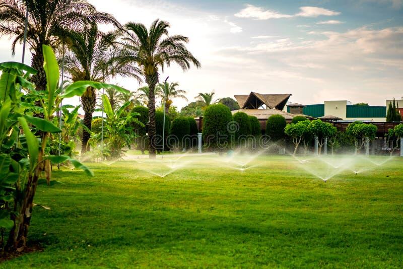 spruzzatore che lavora all'irrigazione dell'erba Sistema antincendio multiplo che innaffia il prato inglese fotografie stock libere da diritti