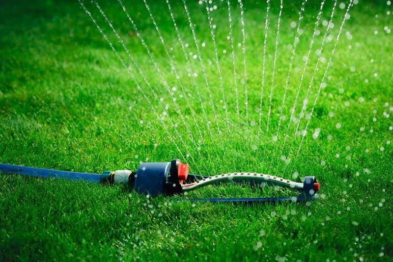 Spruzzatore del prato inglese che castra acqua sopra erba verde immagine stock libera da diritti