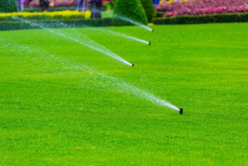 Spruzzatore del prato inglese che castra acqua sopra erba verde Impianto di irrigazione fotografia stock libera da diritti