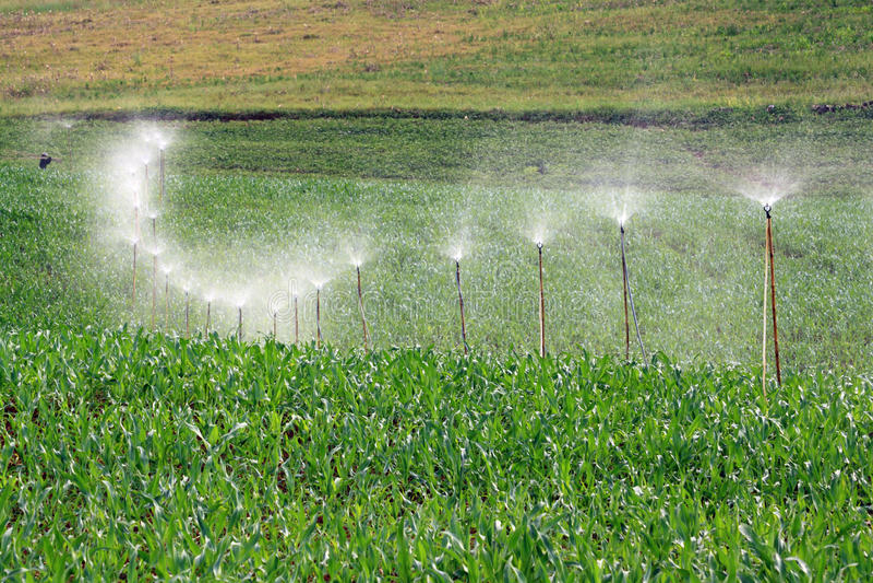 Spruzzatore della curva in azienda agricola immagine stock libera da diritti
