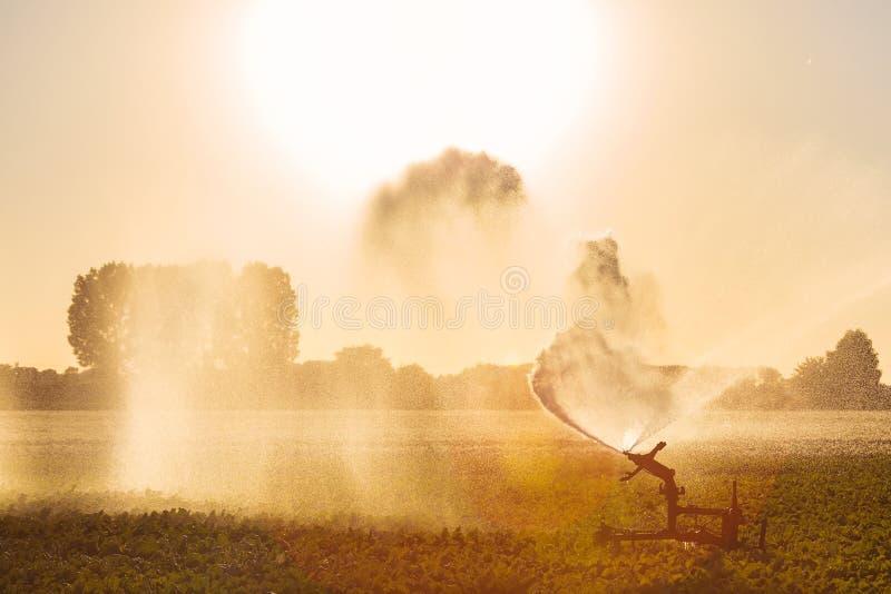 Spruzzatore di irrigazione su terreno coltivabile fotografia stock libera da diritti