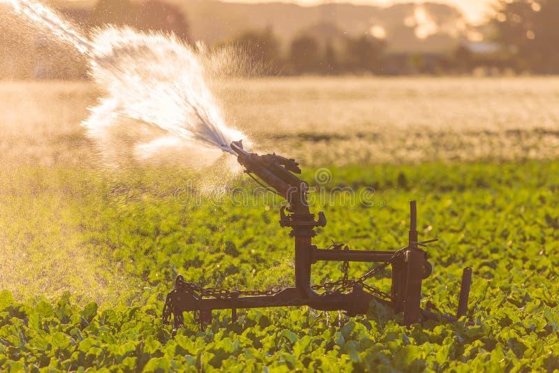 Spruzzatore di irrigazione su terreno coltivabile durante la siccità severa immagine stock