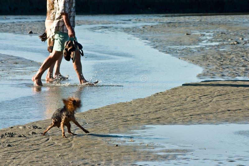 Download Spruzzatura Del Piccolo Cane Fotografia Stock - Immagine di seaside, dabbling: 3132760