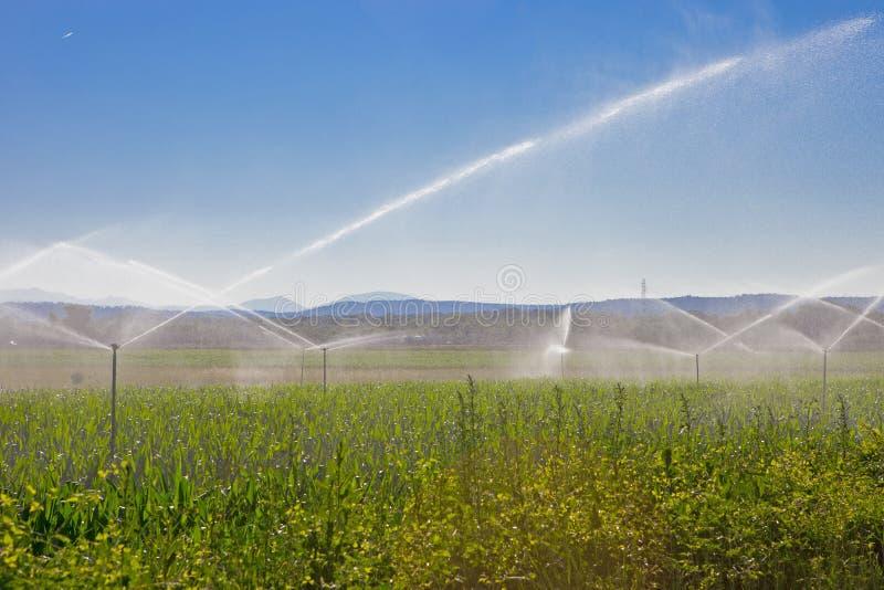 Spruzzo d'acqua di agricoltura fotografie stock
