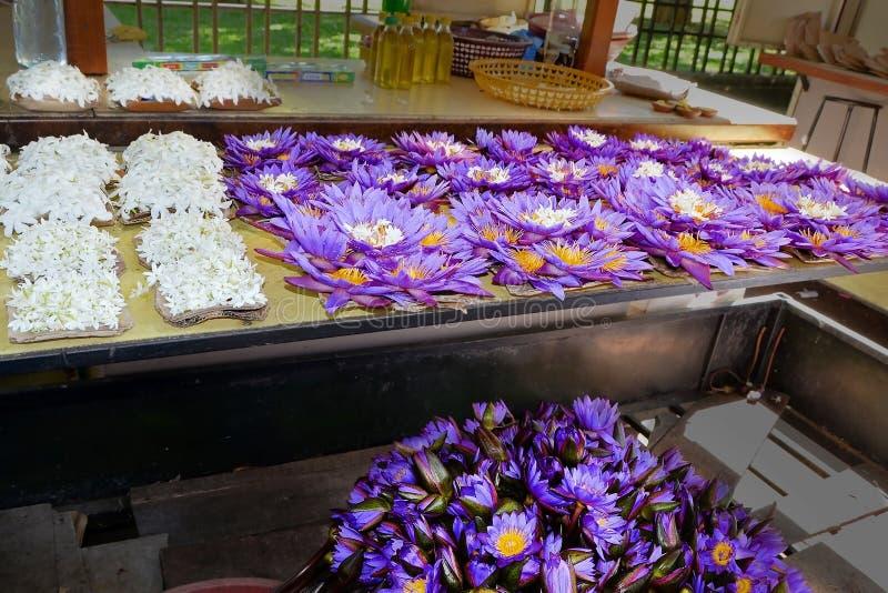 Sprzedaż lotuses w rynku Sri Lanka Świeżość ranku kolekcja kwiaty obraz royalty free