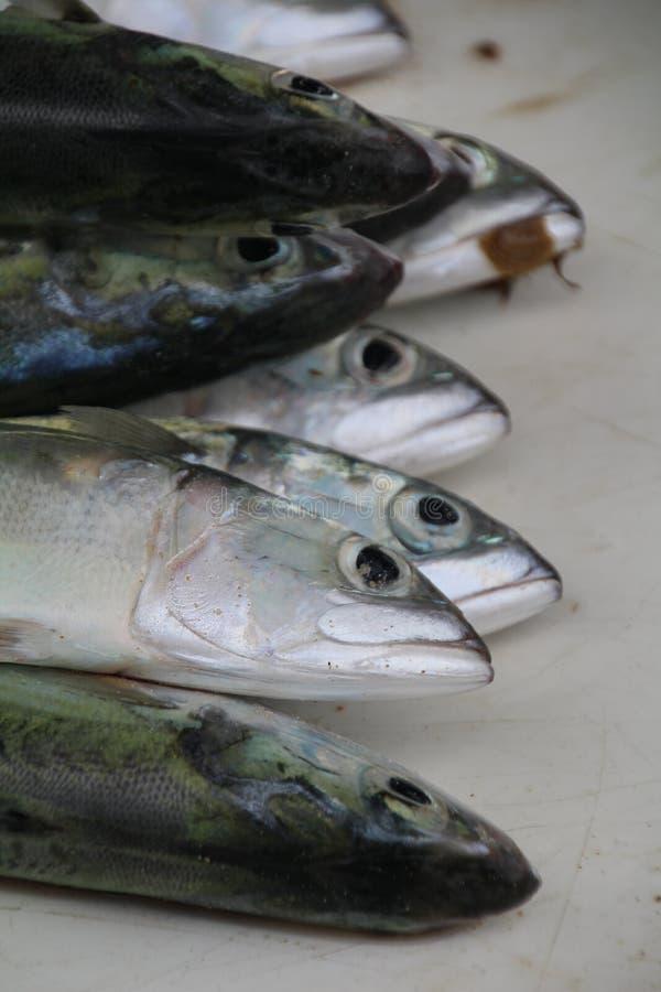 sprzedaży ryb fotografia royalty free