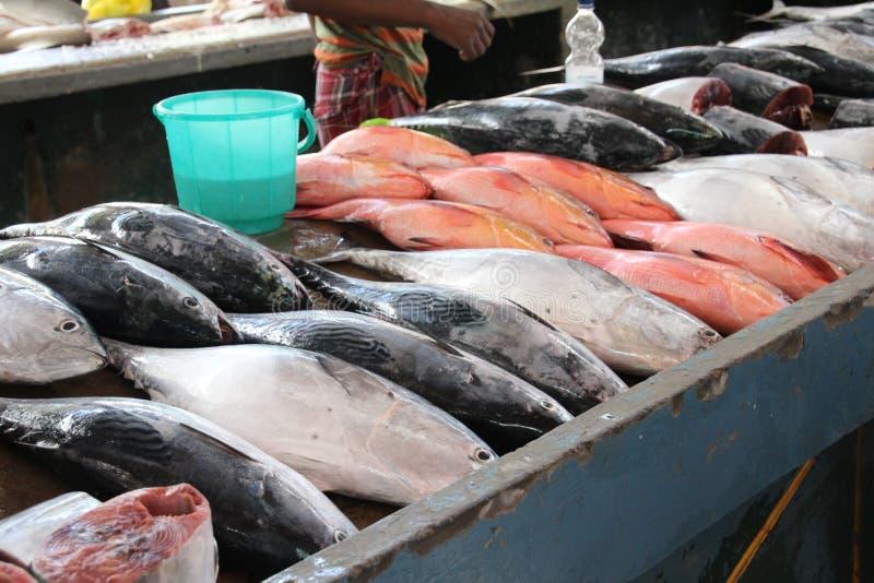 sprzedaży ryb zdjęcie royalty free