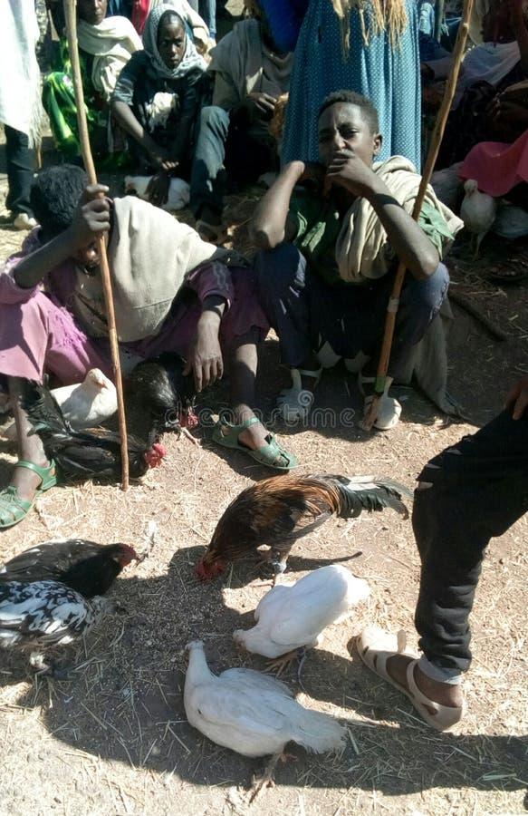 sprzedaje kurczaka obraz royalty free
