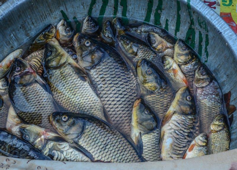 Sprzedawać świeżej ryby przy ulicznym rynkiem fotografia stock