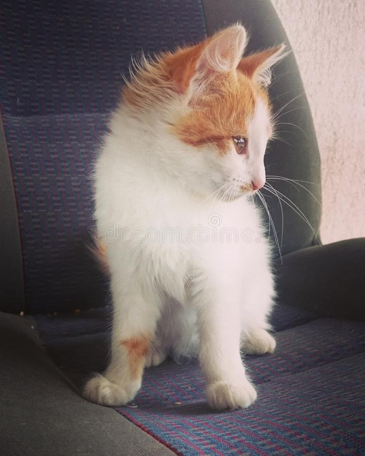 Spufi le chat image stock