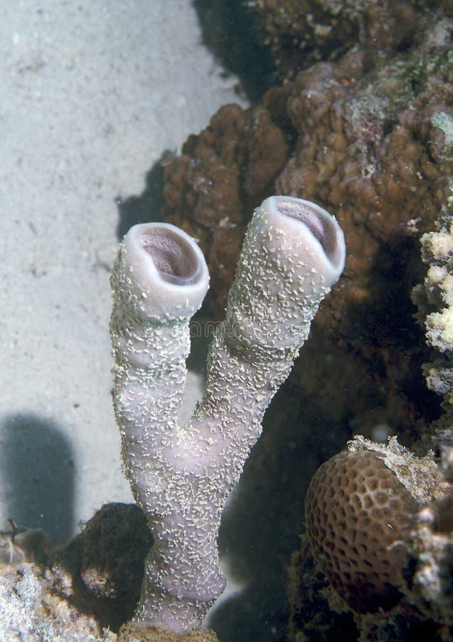 Spugne subacquee   fotografia stock