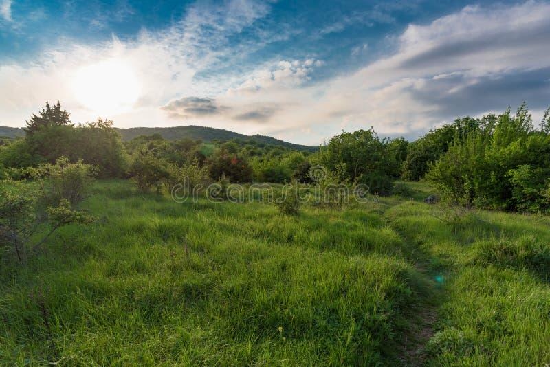 Spur auf einem Gebiet mit Sommersonnenuntergang lizenzfreies stockbild