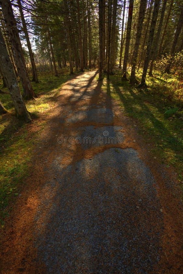 Spur Autumn Leaves Tree Shadows HDRs Sussex lizenzfreie stockfotos