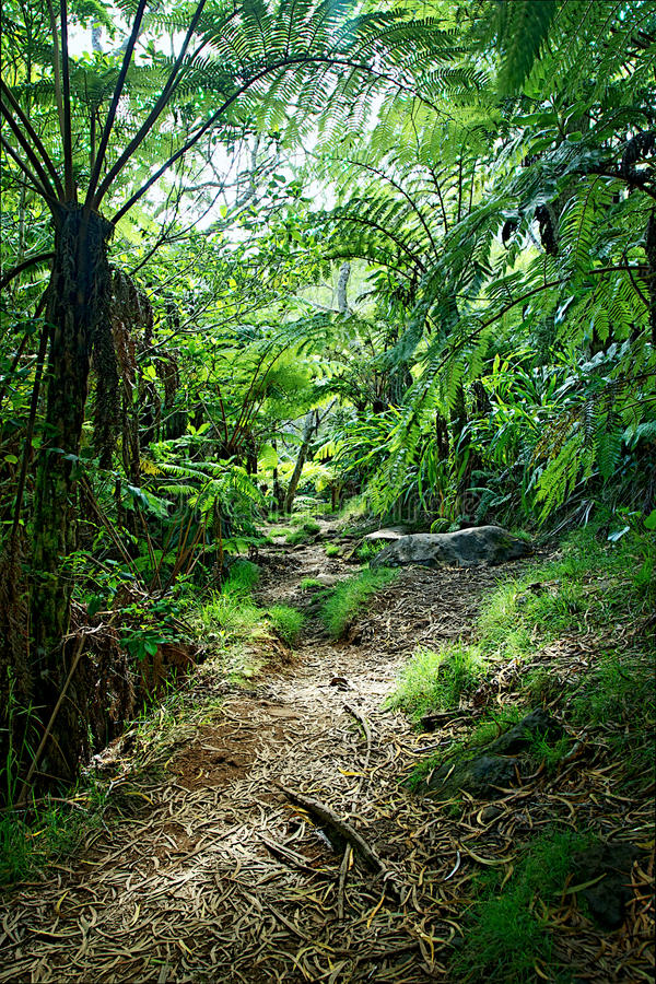 Spur durch Dschungel lizenzfreie stockfotografie