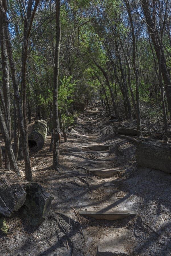 Spur durch einen Busch stockfotografie
