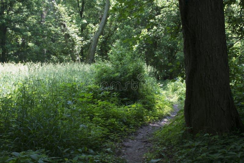 Spur durch hohes Gras lizenzfreies stockfoto