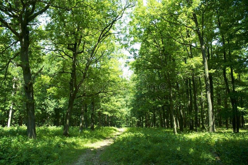 Spur durch Wald lizenzfreies stockbild