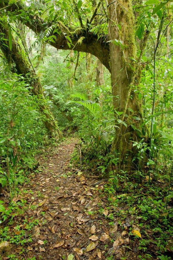 Spur im Wald stockbilder