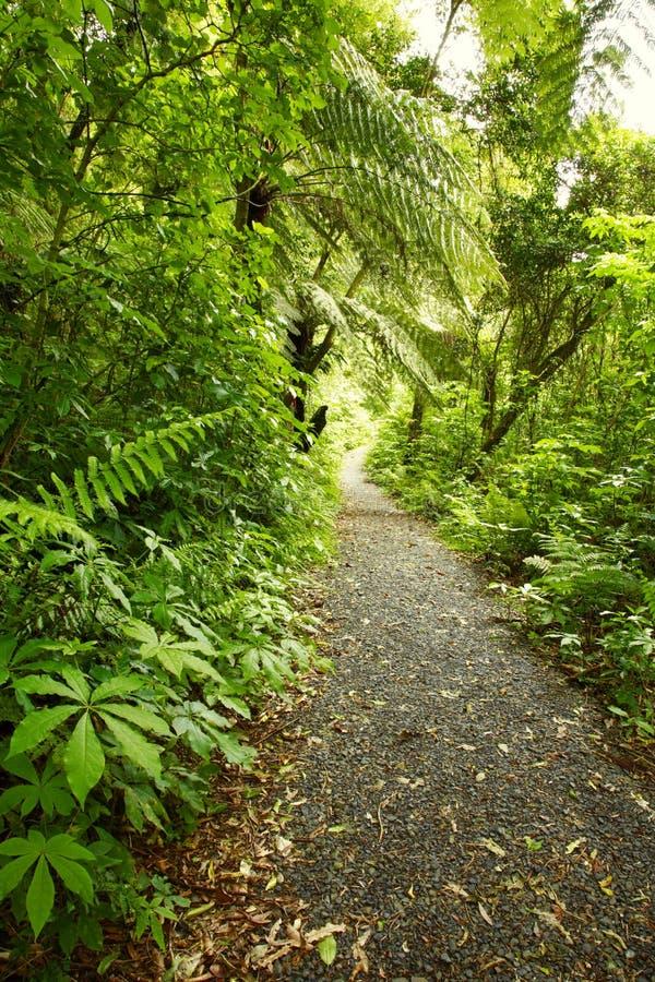 Spur im Wald lizenzfreie stockfotografie