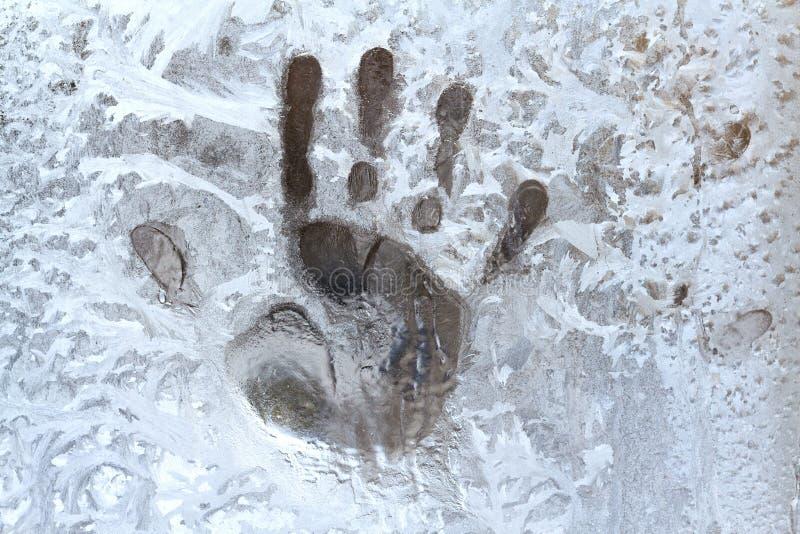 Spur von Palmen auf einem gefrorenen Fenster stockfotografie