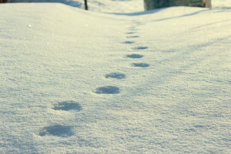 Spuren auf Schnee lizenzfreie stockfotografie