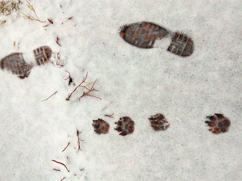 Spuren des Mannes und des Tieres im Schnee stockfotografie