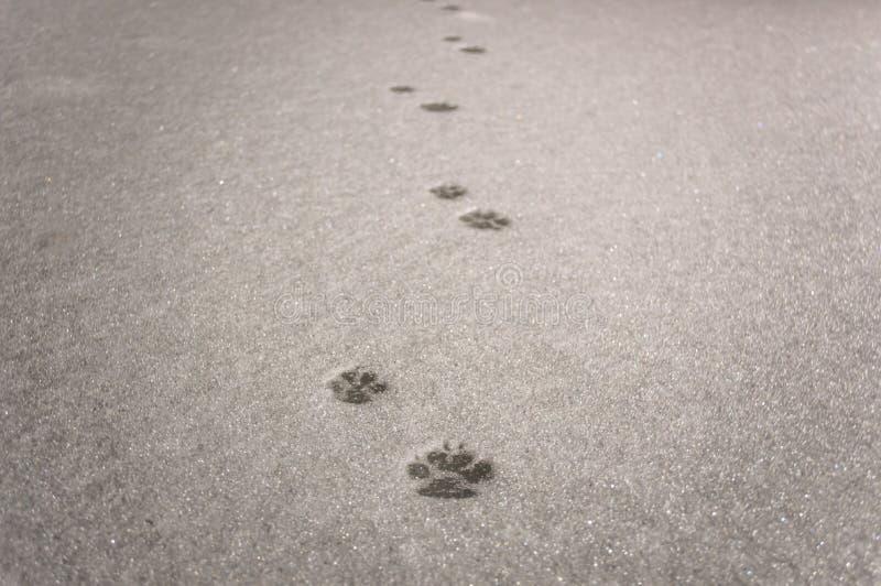 Spuren einer Katze lizenzfreie stockfotos