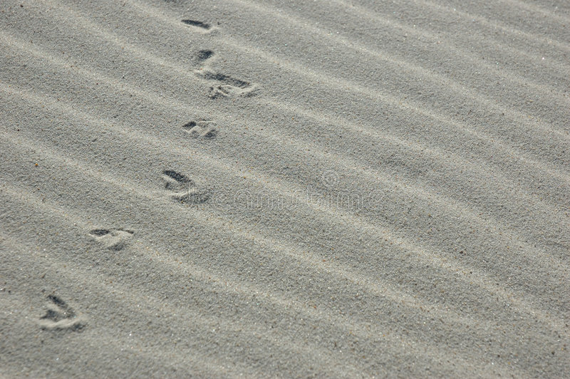 Spuren im Sand lizenzfreies stockfoto